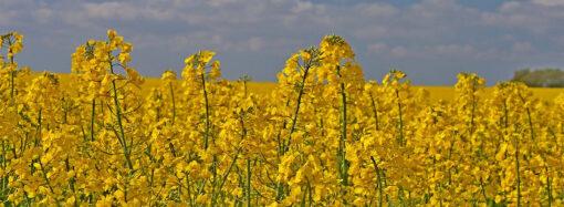 Skatt på bioolja leder till mer fossilolja